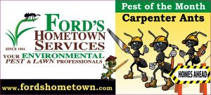 Pest of the month carpenter ants