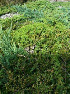 Hidden yellow jacket nest