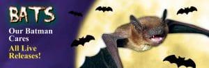fords-bats-144x47
