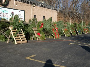 Trees & Wreaths