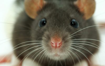 How Do You Get Rid Of Mice For Good?