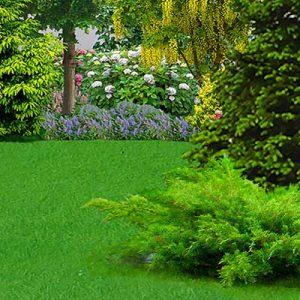 Premier Lawn