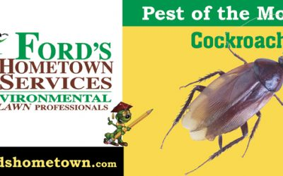 Pest of the Month, Cockroaches