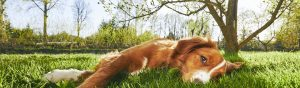 image of a dog lying on the grass