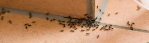 image of ants crawling across kitchen counter