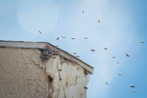 Bee Careful!