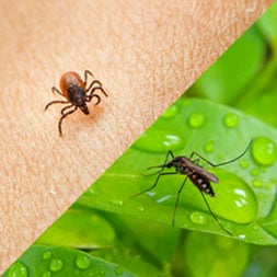 Ticks and Mosquitoes