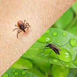 Worcester Pest Control for Worcester, Massachusetts