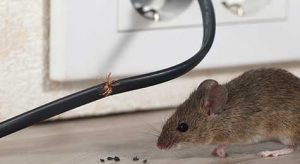 Serve rodents an eviction notice with Ford's Hometown Services.