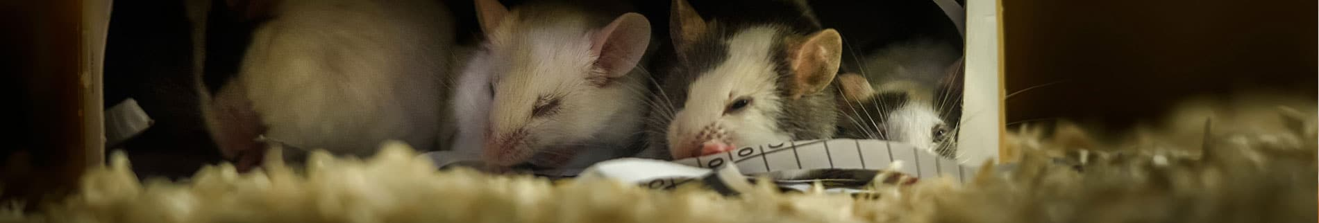Mice and Rat Control Products