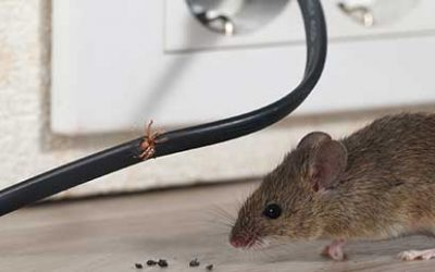 Mouse Control Indoors and Outside
