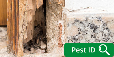 Wood Destroying Insects termites carpenter bees Powder Post Beetles Old House Borers
