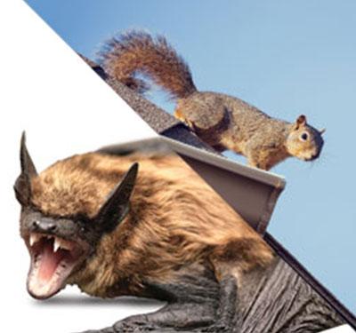 BAT/WILDLIFE REMOVAL