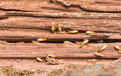 3 Signs of a Termite Infestation